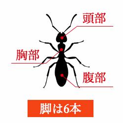 アリの画像