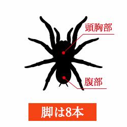 蜘蛛の画像