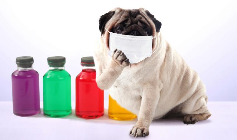 通年性のアレルギー鼻炎について02