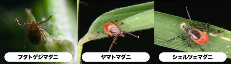 マダニ_760x213